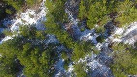 Aufstiegsbrummen im Winterwald, Vogelperspektive stock footage