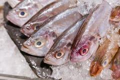 AUFWÄNDIGE FADENFISCH-BRACHSEN-Abdeckung mit Eis im Meeresfrüchtemarkt Stockbilder