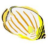 Aufwändiger Butterflyfishvektor Stockfotos