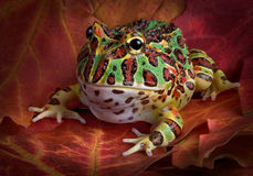 Aufwändiger Frosch auf Fallblättern Stockbild