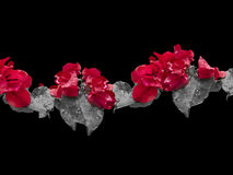 Aufwändiger mit Blumenhintergrund Lizenzfreie Stockfotografie
