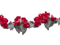 Aufwändiger mit Blumenhintergrund Stockbilder