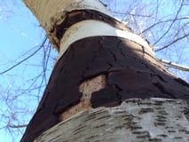 Aufwärts Ansicht eines mehrfarbigen Baums im Wald Lizenzfreie Stockfotografie