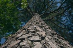 Aufwärts Perspektive des Baums, verblaßt und der Weinlese stockfotos