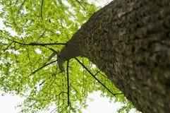 Aufwärts Winkel des Baums Stockbild