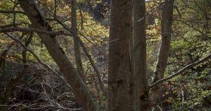 Aufwärtstendenz mit Kran nahe Stämmen von Bäumen stock video