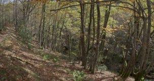 Aufwärtstendenz vom unteren Ende zur Spitze mit der Ansicht des Waldes und des Weges stock footage