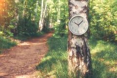 Aufwachen der Natur in der Waldänderungsjahreszeit lizenzfreie stockfotografie