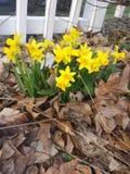 Aufwachender Frühling Stockfoto