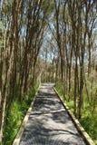 Aufwecken des Weges im Wald lizenzfreies stockbild