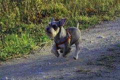 Aufwecken meines Hundmilo lizenzfreie stockfotos