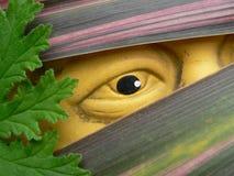 Auge auf dem Garten stockbild