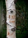 Auge auf Initialen Stockbilder