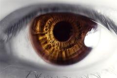 Auge, Augapfel Stockbilder