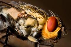 Auge der Fliege lizenzfreies stockfoto