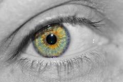 Auge der Frauen. Lizenzfreie Stockfotos