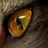 Auge der Katze Lizenzfreie Stockbilder