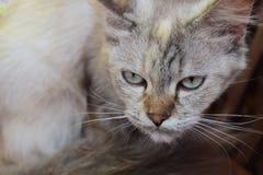 Auge der kleinen Katze im Bett stockfotos