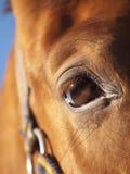 Auge der roten Pferdennahaufnahme am blauen Himmel Stockfoto