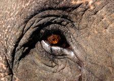 Auge des asiatischen Elefanten Stockbild