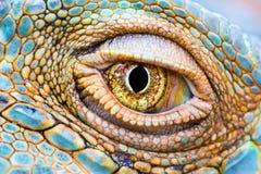 Auge des Drachen Stockbild
