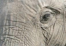 Auge des Elefanten Stockfoto