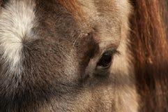 Auge des europäischen braunen Pferds Lizenzfreie Stockfotografie