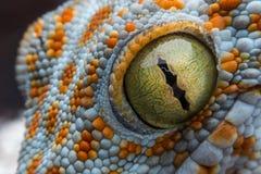 Auge des Geckos stockbild