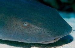 Auge des Haifischs Stockbilder