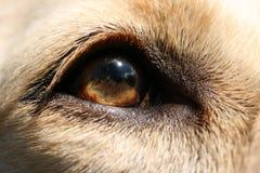 Auge des Hundes Lizenzfreie Stockbilder