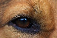 Auge des Hundes Lizenzfreies Stockfoto