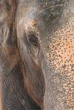 Auge des indischen Elefanten Lizenzfreie Stockfotos