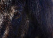 Auge des isländischen Pferds Lizenzfreie Stockbilder
