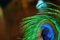 Auge des Pfaus Stockbild