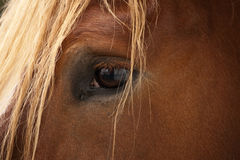 Auge des Pferds Lizenzfreie Stockfotos