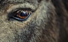 Auge des Pferds Lizenzfreie Stockbilder