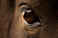 Auge des Pferds