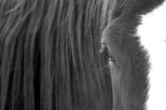 Auge des Pferds lizenzfreies stockbild