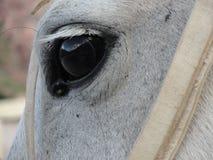 Auge des Pferds Stockbilder