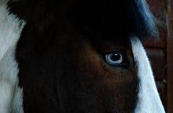 Auge des Pferds stockfotos