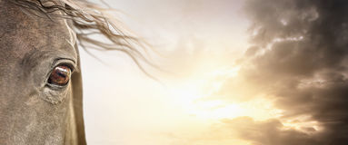 Auge des Pferds mit der Mähne auf bewölktem Himmel, Fahne Stockbild