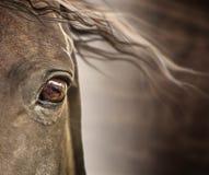 Auge des Pferds mit der Mähne auf dunklem Hintergrund Lizenzfreie Stockfotos