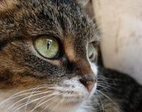 Auge des Tigers Lizenzfreies Stockbild