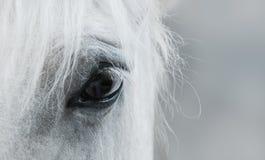 Auge des weißen Mustangs Stockfotografie