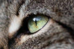 Auge einer Katze in der Nahaufnahme lizenzfreie stockfotografie