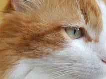 Auge einer Katze, Seitenansicht lizenzfreie stockfotografie