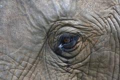 Auge eines afrikanischen Bush-Elefanten, Addo Elephant National Park Lizenzfreie Stockbilder