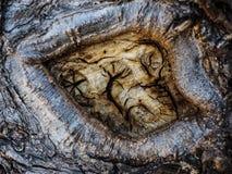 Auge eines Baums Stockfotos