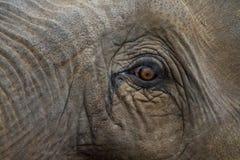 Auge eines Elefanten Lizenzfreie Stockbilder