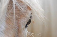 Auge eines Pferds Lizenzfreie Stockbilder